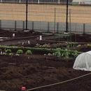 今春、区民農園を始めました